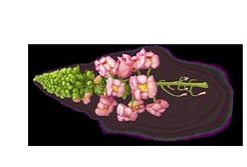 Floral flavour
