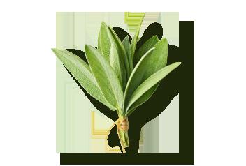 Sage flavour
